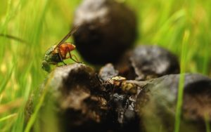 insect-807923_1280