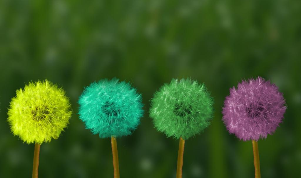 Les 4 phases du cycle menstruel illustrées par des plantes
