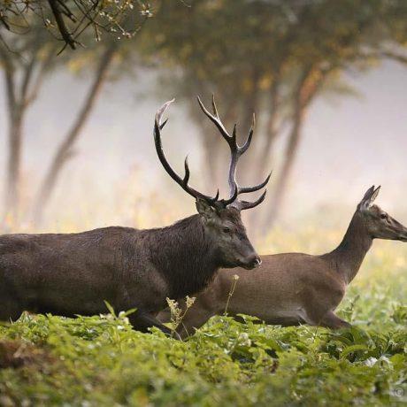 Animaux 100% libres en milieu naturel.